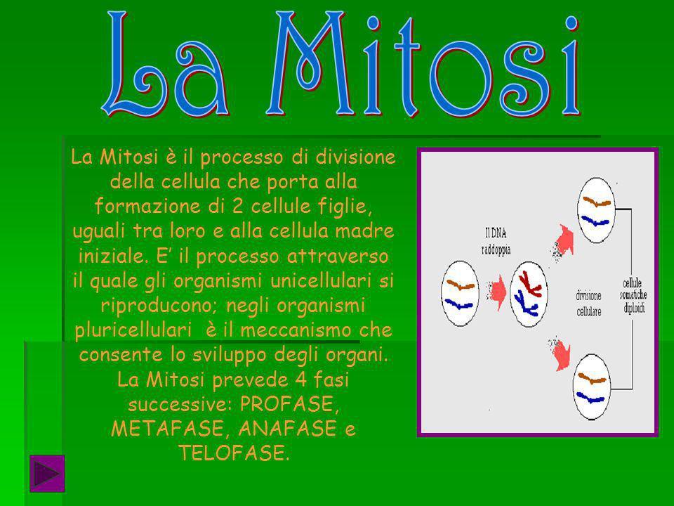 La Mitosi