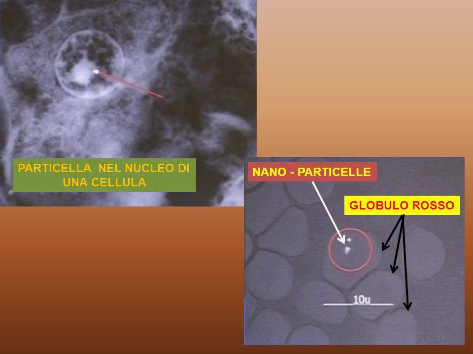 PARTICELLA NEL NUCLEO DI UNA CELLULA NANO - PARTICELLE