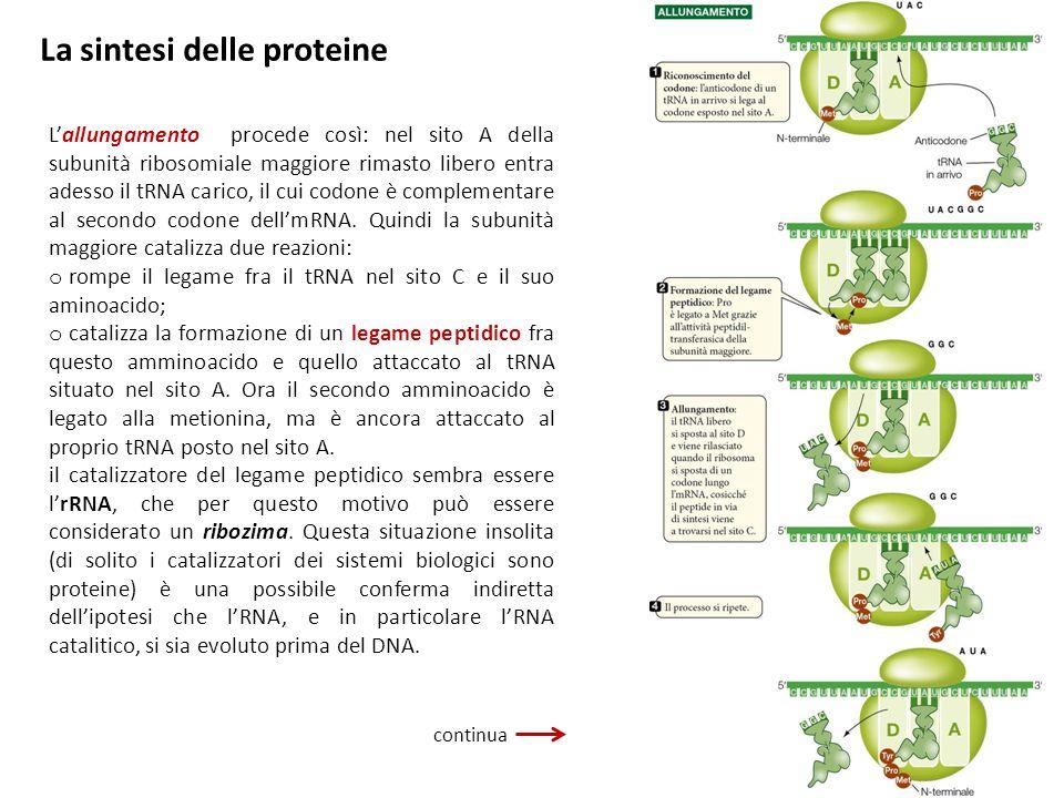 La sintesi delle proteine