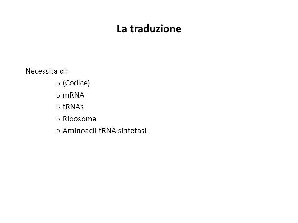 La traduzione Necessita di: (Codice) mRNA tRNAs Ribosoma