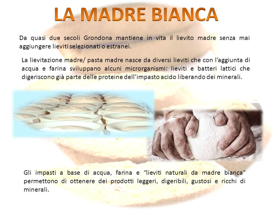 LA MADRE BIANCA Da quasi due secoli Grondona mantiene in vita il lievito madre senza mai aggiungere lieviti selezionati o estranei.