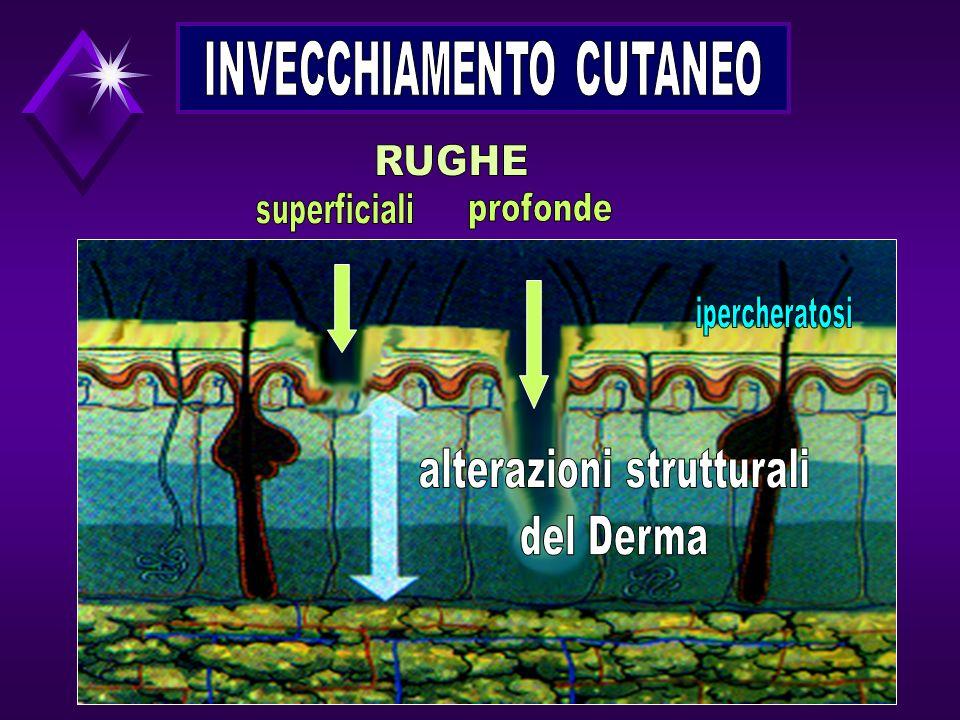 RUGHE alterazioni strutturali del Derma INVECCHIAMENTO CUTANEO