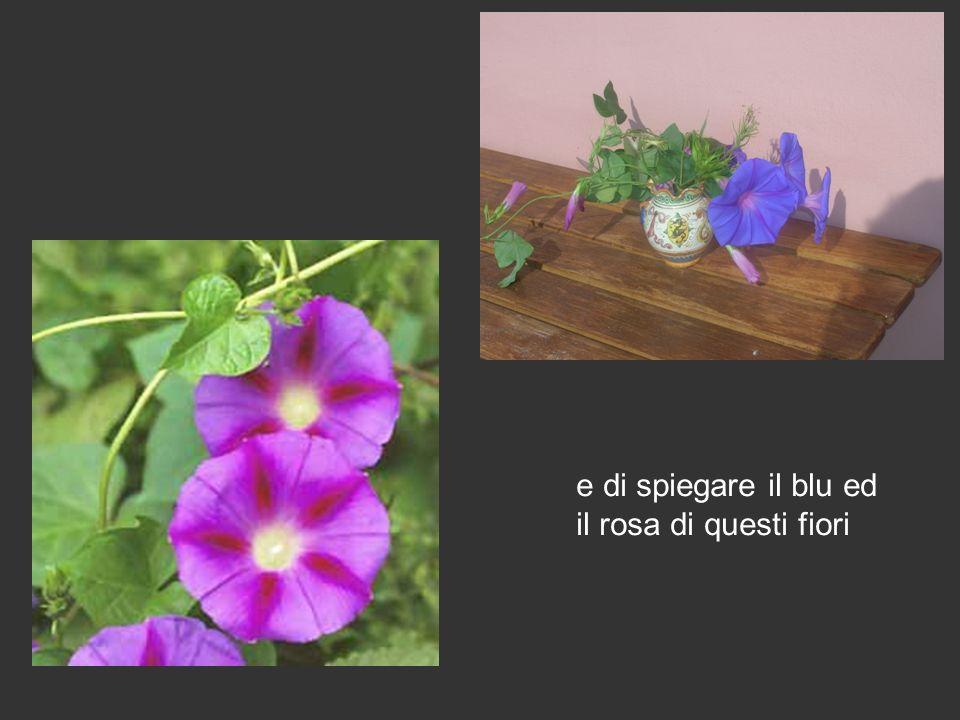 e di spiegare il blu ed il rosa di questi fiori