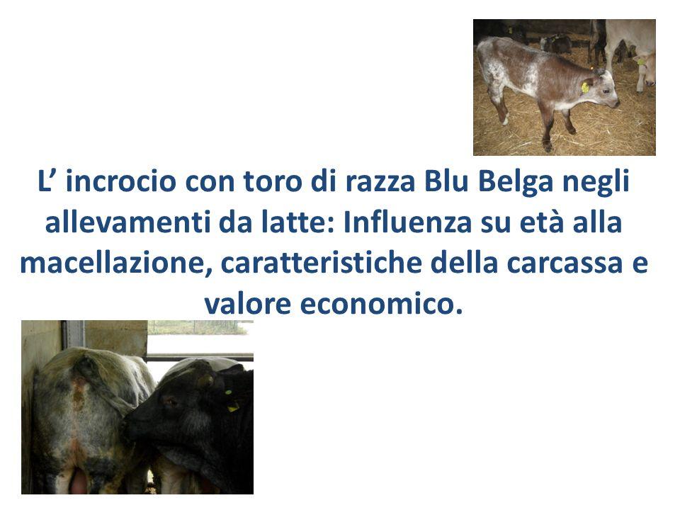 L' incrocio con toro di razza Blu Belga negli allevamenti da latte: Influenza su età alla macellazione, caratteristiche della carcassa e valore economico.