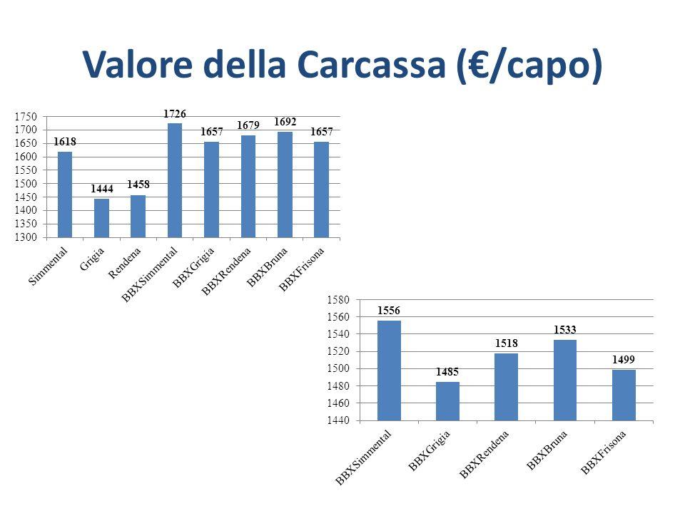 Valore della Carcassa (€/capo)