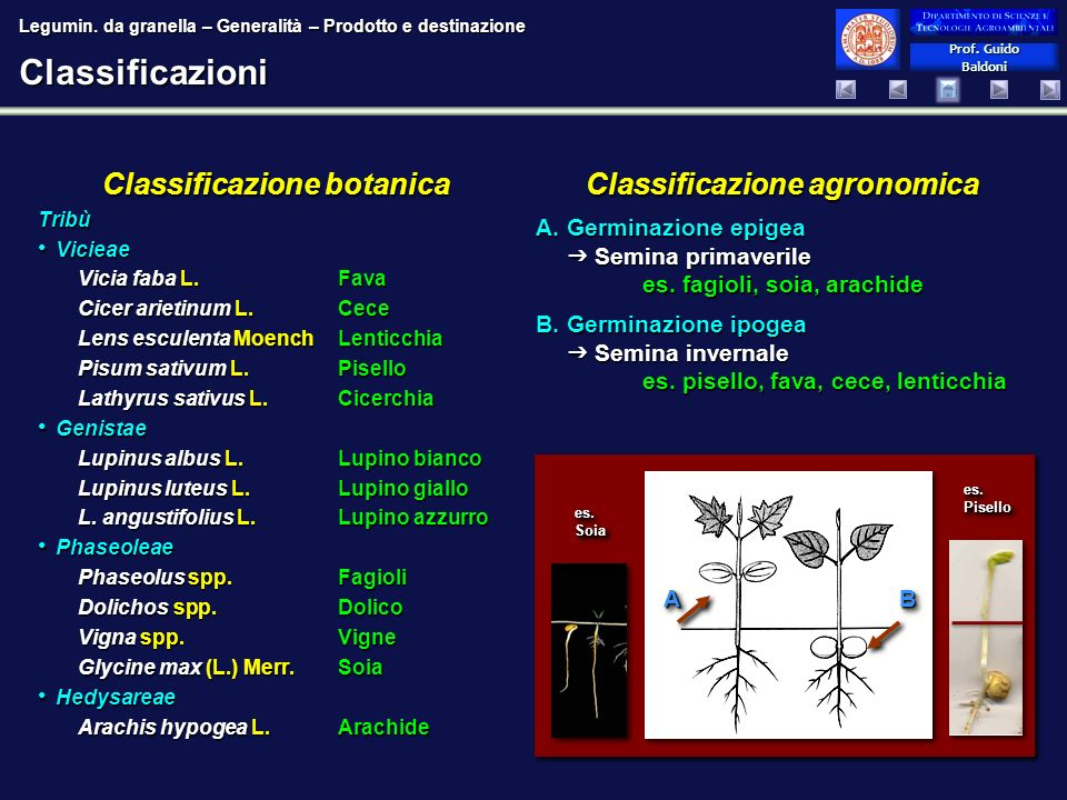 Classificazione botanica Classificazione agronomica