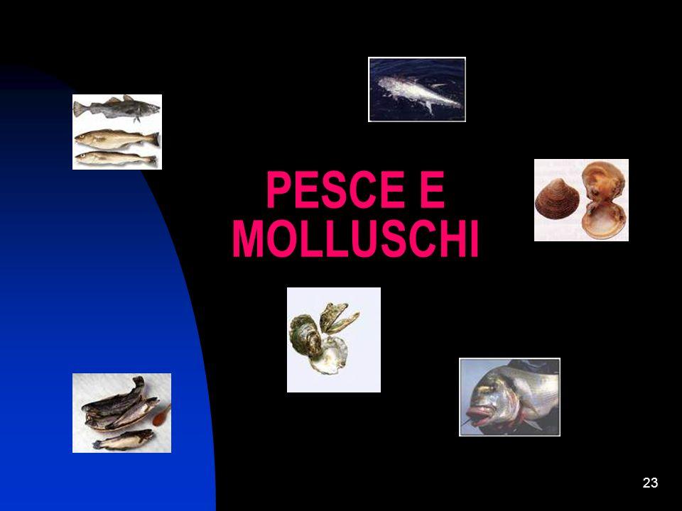 PESCE E MOLLUSCHI
