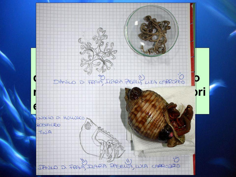 IN LABORATORIO: disegni degli organismi e loro riconoscimento attraverso libri e guide