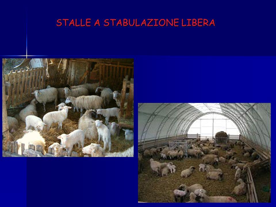STALLE A STABULAZIONE LIBERA