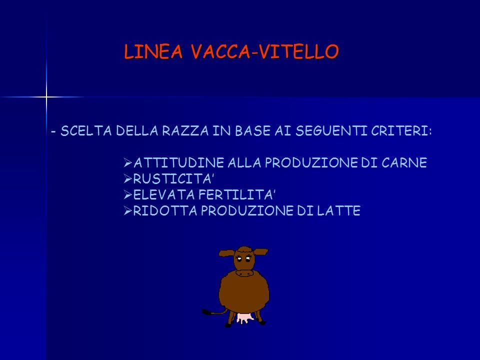 LINEA VACCA-VITELLO SCELTA DELLA RAZZA IN BASE AI SEGUENTI CRITERI: