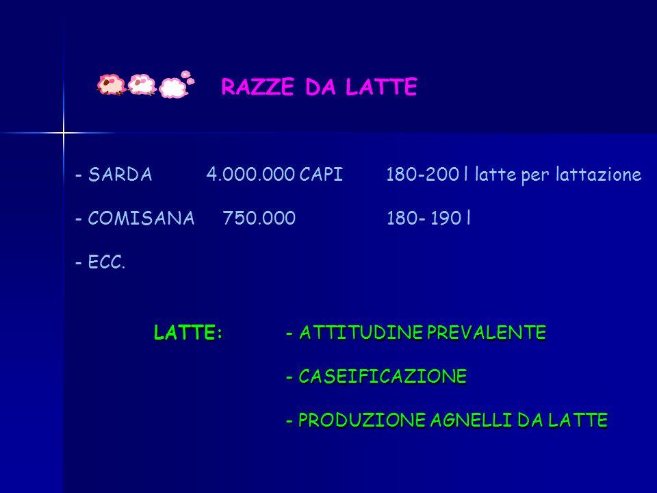 RAZZE DA LATTE - SARDA 4.000.000 CAPI 180-200 l latte per lattazione