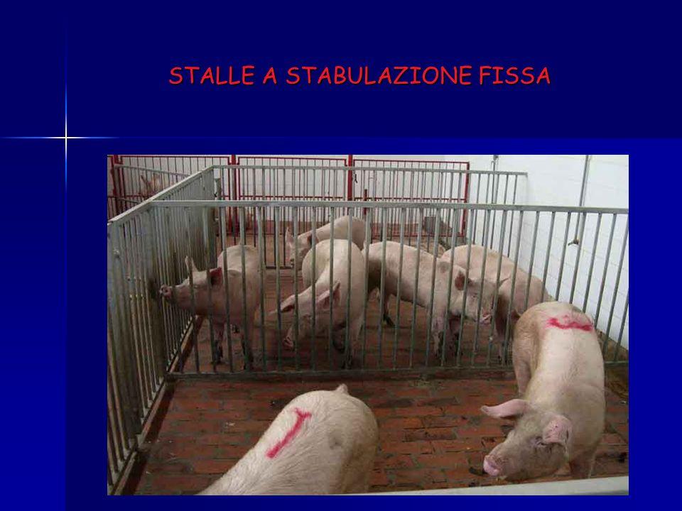 STALLE A STABULAZIONE FISSA