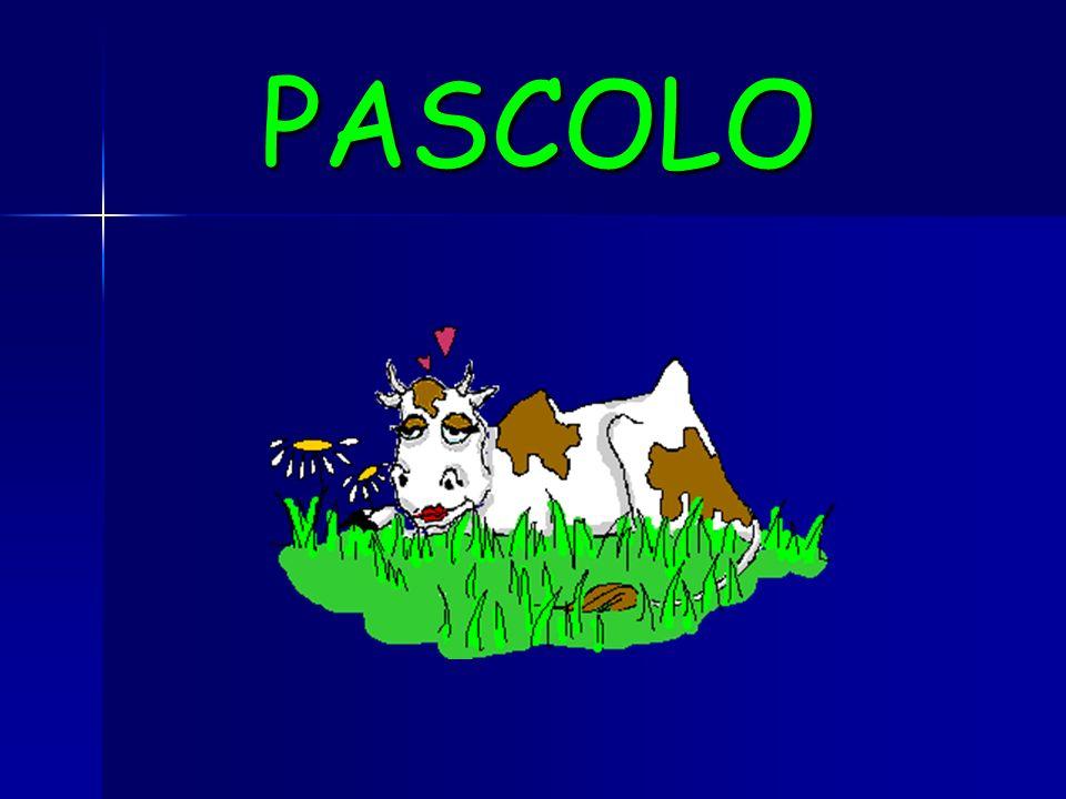 PASCOLO