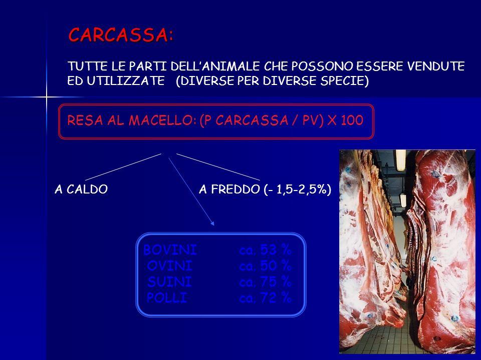 CARCASSA: RESA AL MACELLO: (P CARCASSA / PV) X 100 BOVINI ca. 53 %
