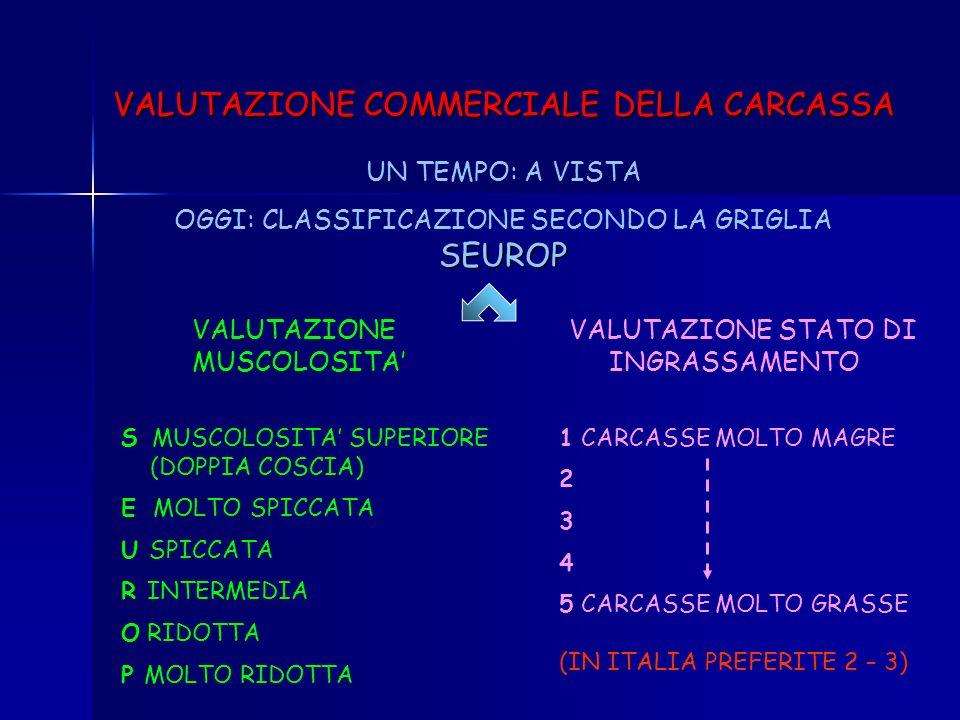 VALUTAZIONE COMMERCIALE DELLA CARCASSA