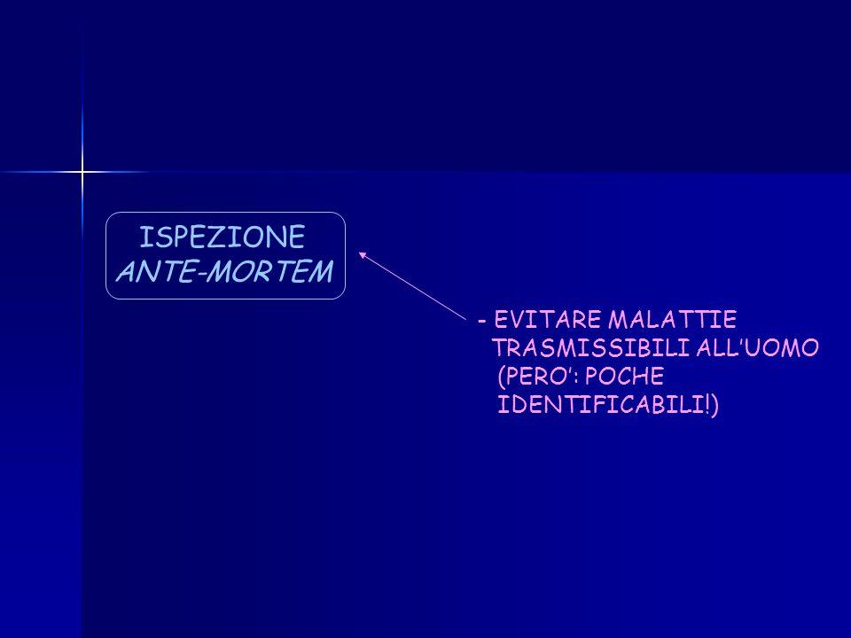 ISPEZIONE ANTE-MORTEM EVITARE MALATTIE TRASMISSIBILI ALL'UOMO
