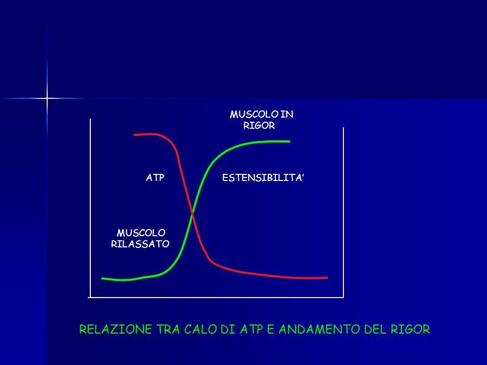 RELAZIONE TRA CALO DI ATP E ANDAMENTO DEL RIGOR