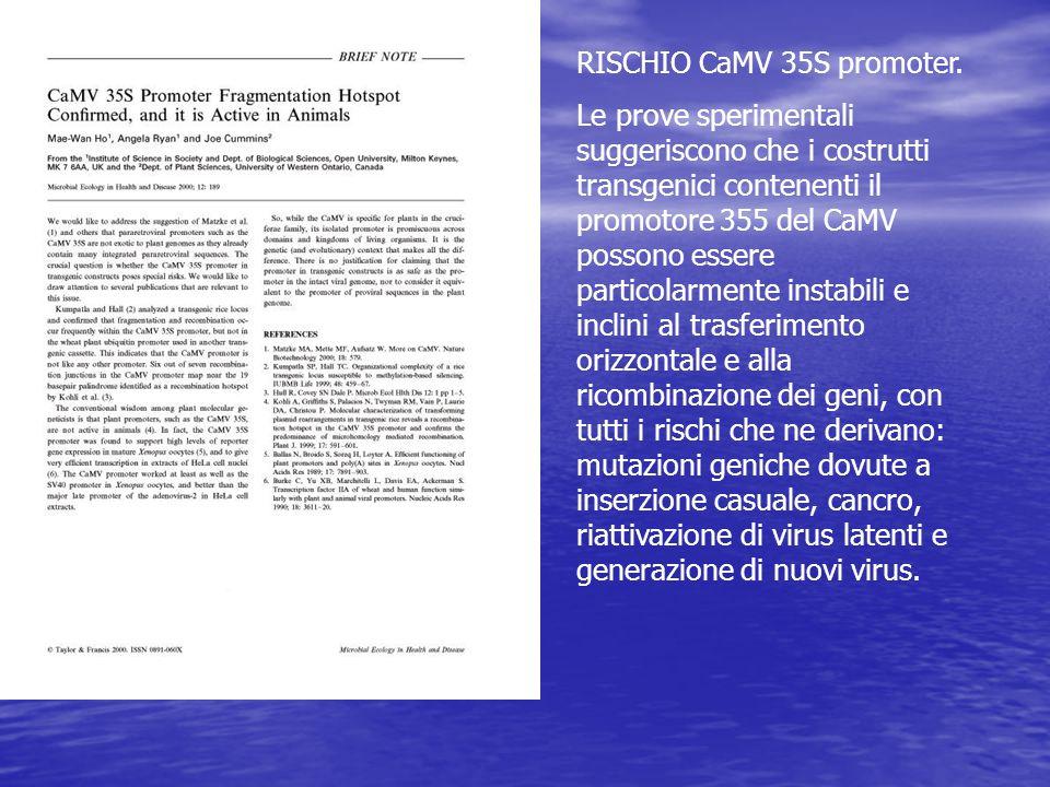 RISCHIO CaMV 35S promoter.
