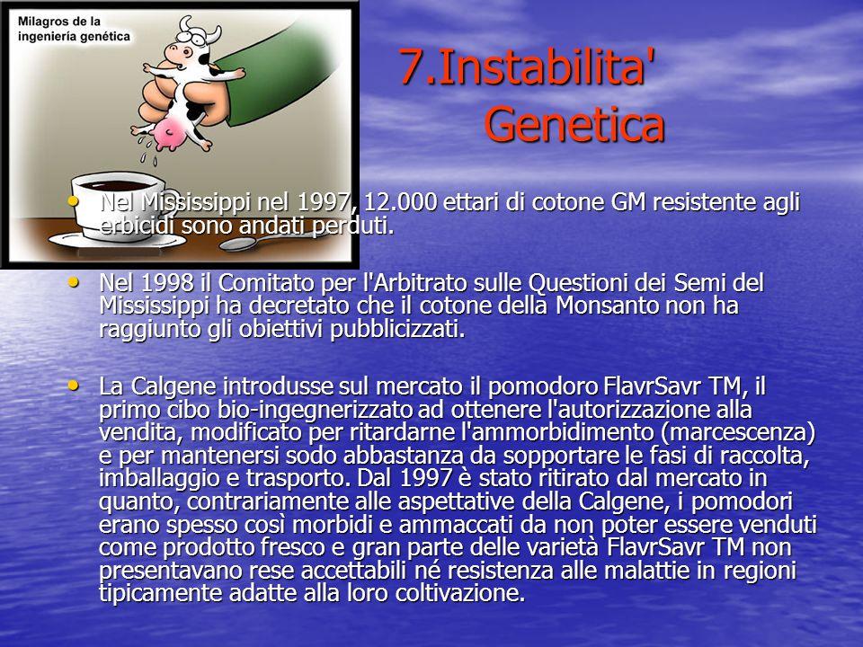 7.Instabilita Genetica Nel Mississippi nel 1997, 12.000 ettari di cotone GM resistente agli erbicidi sono andati perduti.