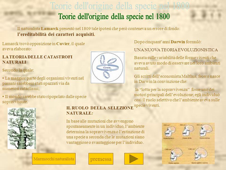 Teorie dell origine della specie nel 1800