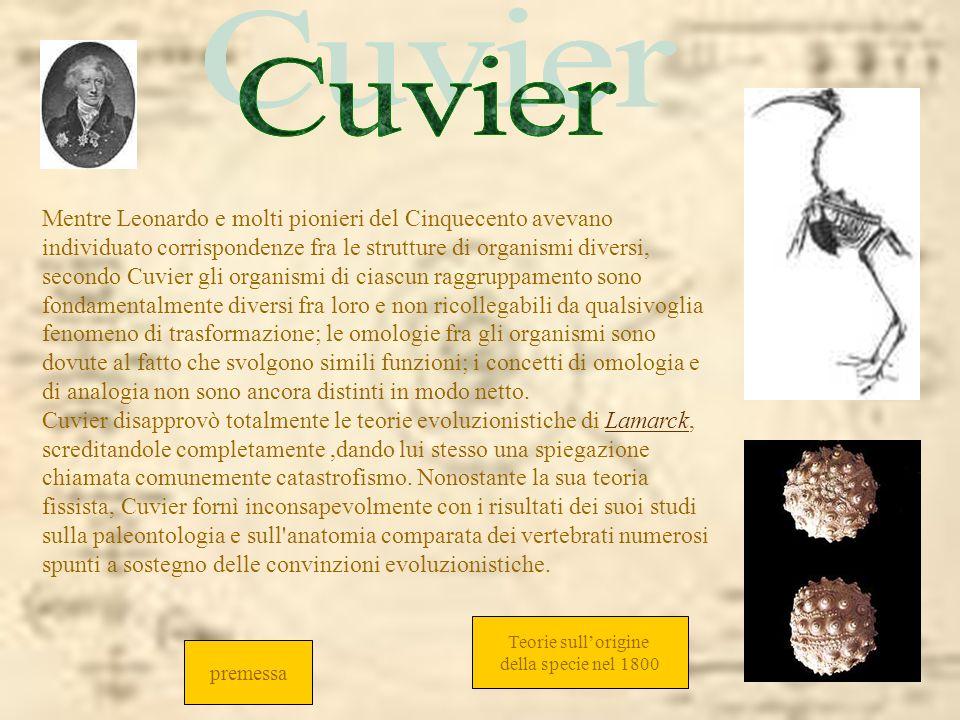 Cuvier Cuvier.