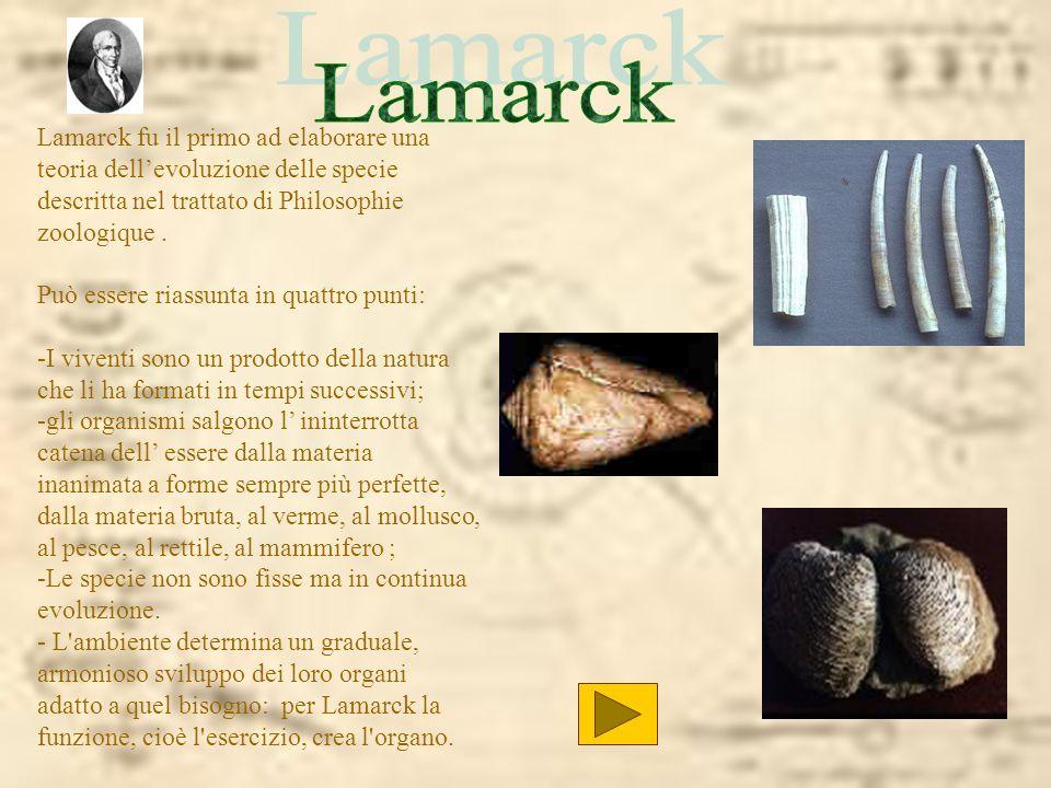 Lamarck Lamarck fu il primo ad elaborare una teoria dell'evoluzione delle specie descritta nel trattato di Philosophie zoologique .