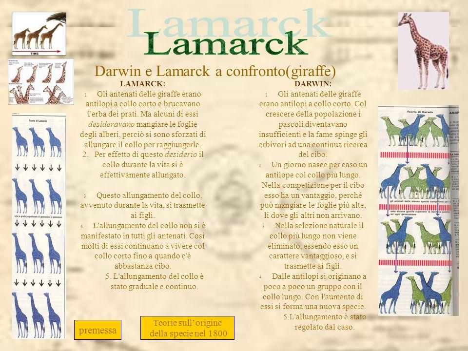 Lamarck Darwin e Lamarck a confronto(giraffe)