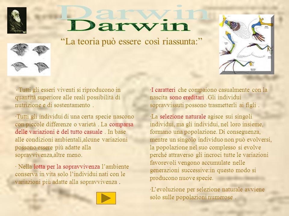Darwin La teoria può essere così riassunta: