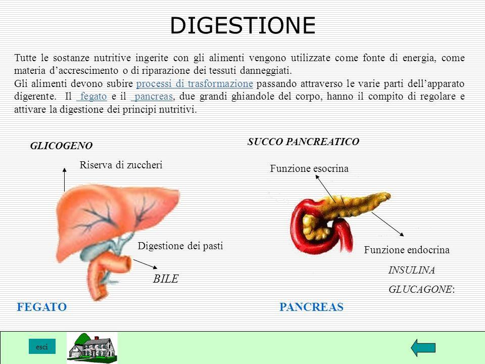 DIGESTIONE BILE FEGATO PANCREAS