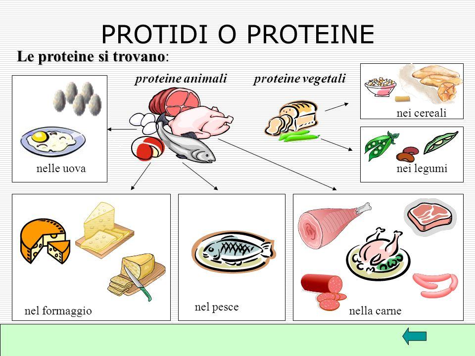 PROTIDI O PROTEINE Le proteine si trovano: proteine animali