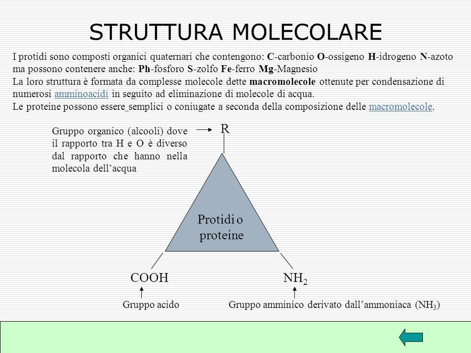 STRUTTURA MOLECOLARE R Protidi o proteine COOH NH2