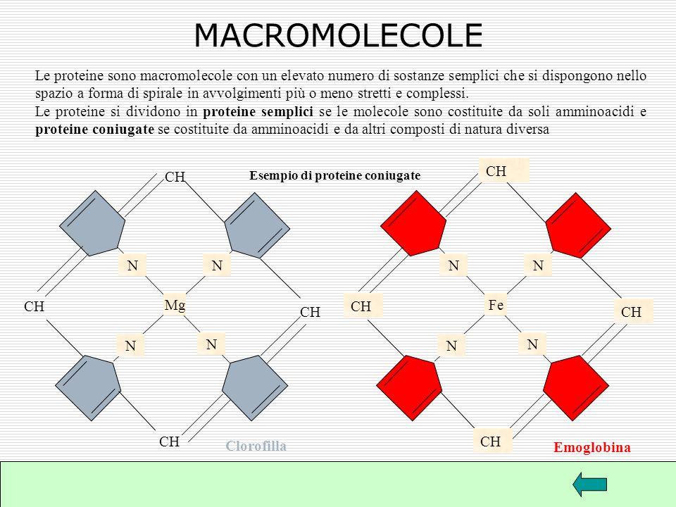MACROMOLECOLE CH CH N N N N CH Mg CH Fe CH CH N N N N CH CH
