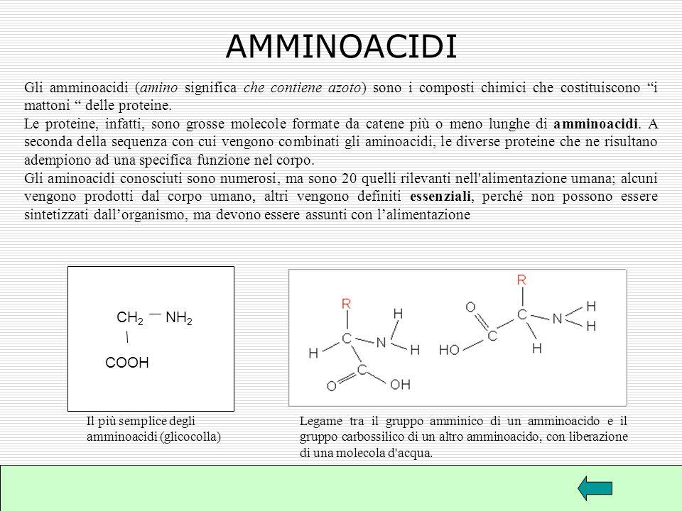 AMMINOACIDI Gli amminoacidi (amino significa che contiene azoto) sono i composti chimici che costituiscono i mattoni delle proteine.