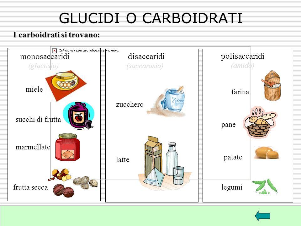 GLUCIDI O CARBOIDRATI I carboidrati si trovano: monosaccaridi