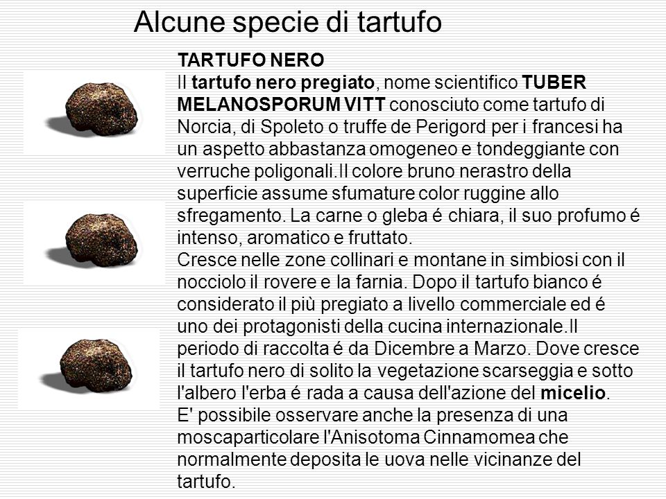 Alcune specie di tartufo