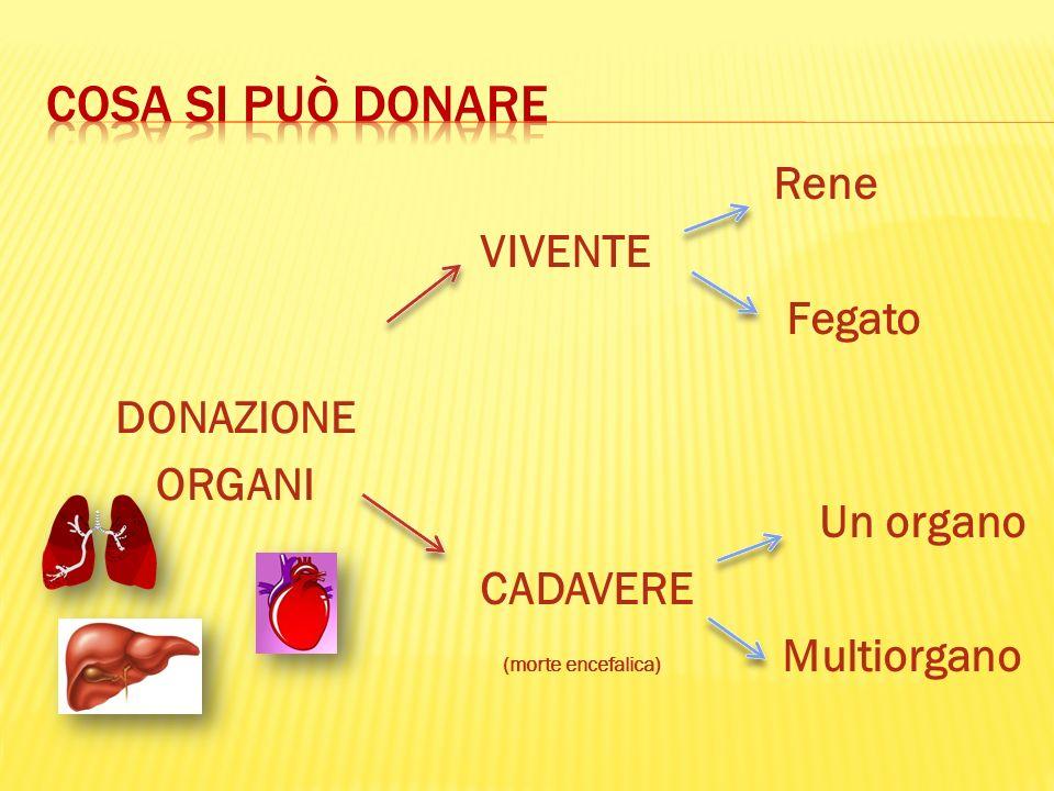 Cosa si può donare Rene VIVENTE Fegato DONAZIONE ORGANI Un organo