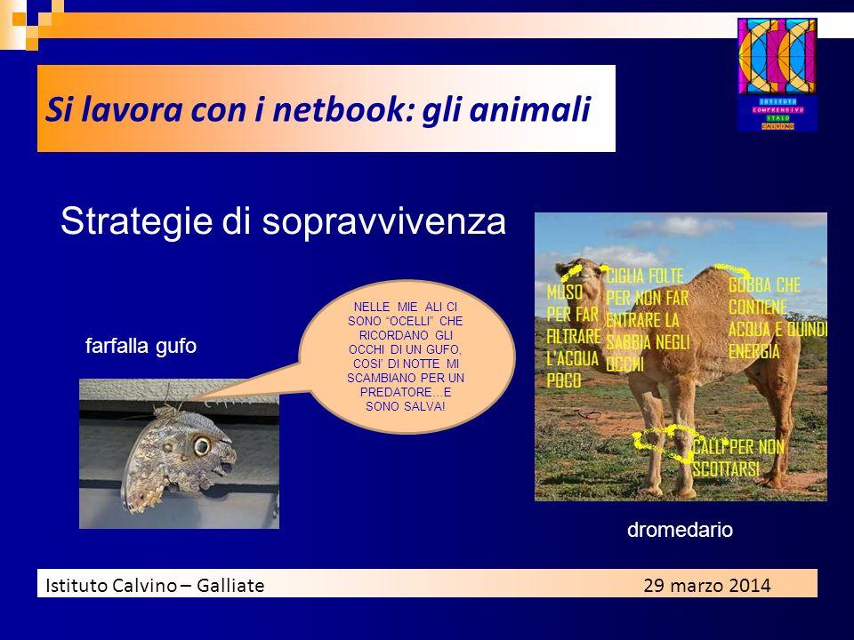 Si lavora con i netbook: gli animali