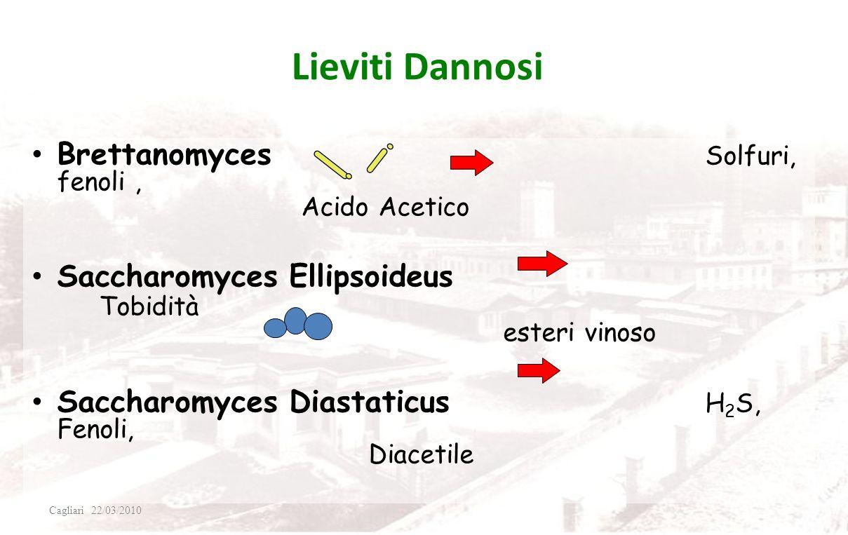 Lieviti Dannosi Brettanomyces Solfuri, fenoli , Acido Acetico