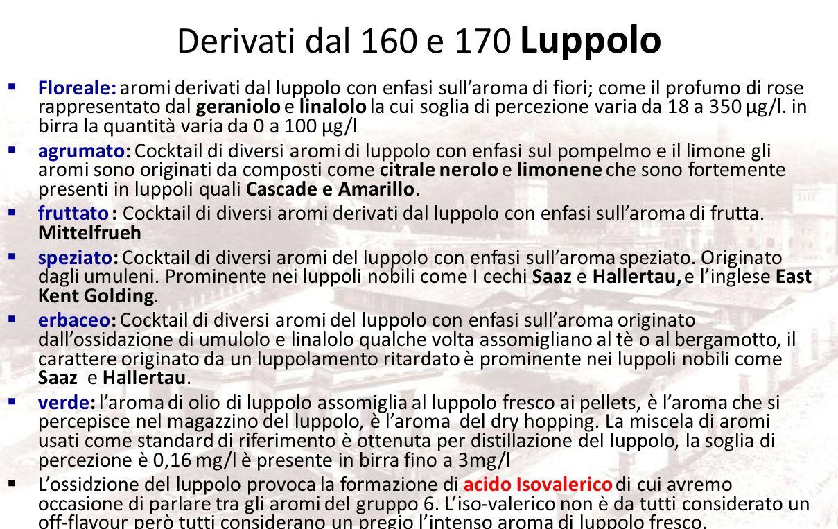Derivati dal 160 e 170 Luppolo