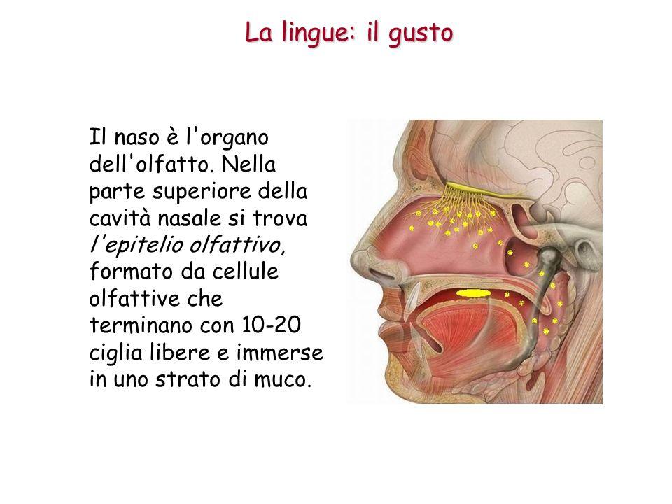 La lingue: il gusto