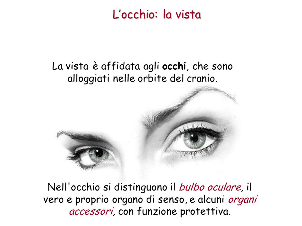 L'occhio: la vista La vista è affidata agli occhi, che sono alloggiati nelle orbite del cranio.