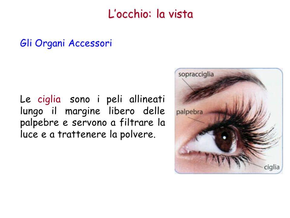 L'occhio: la vista Gli Organi Accessori