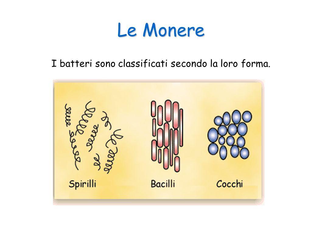 I batteri sono classificati secondo la loro forma.