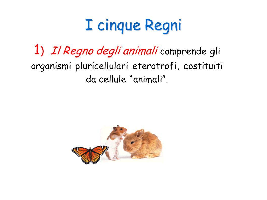 I cinque Regni 1) Il Regno degli animali comprende gli organismi pluricellulari eterotrofi, costituiti da cellule animali .