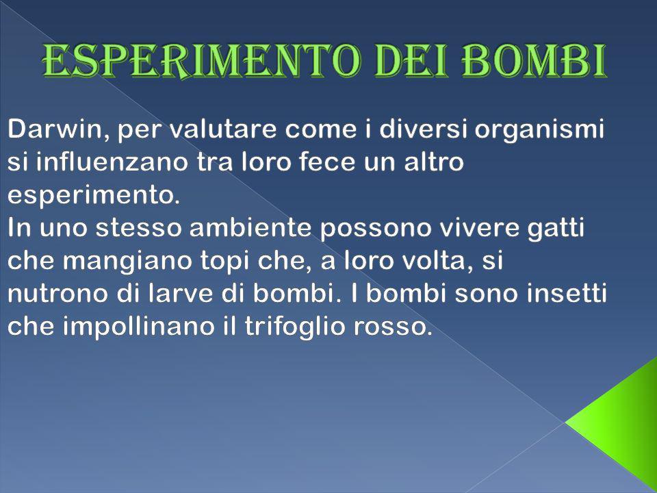 Esperimento dei bombi Darwin, per valutare come i diversi organismi si influenzano tra loro fece un altro esperimento.
