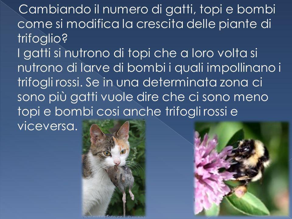 Cambiando il numero di gatti, topi e bombi come si modifica la crescita delle piante di trifoglio.