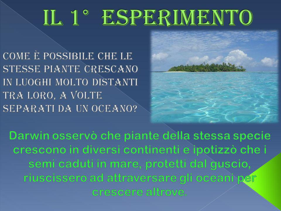 Il 1° esperimento Come è possibile che le stesse piante crescano in luoghi molto distanti tra loro, a volte separati da un oceano
