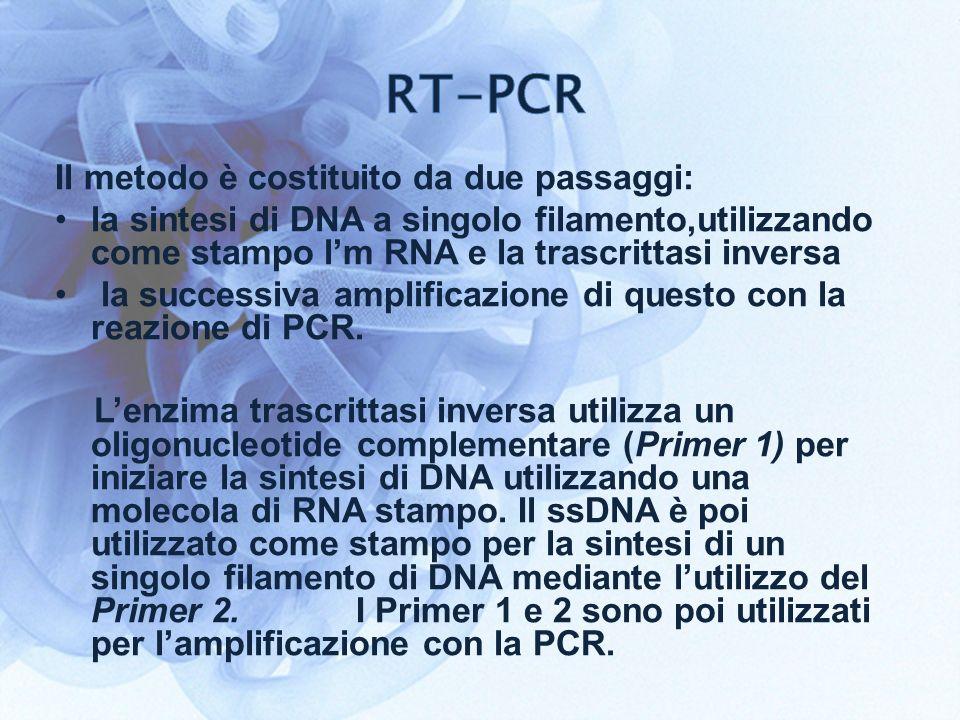 RT-PCR Il metodo è costituito da due passaggi: