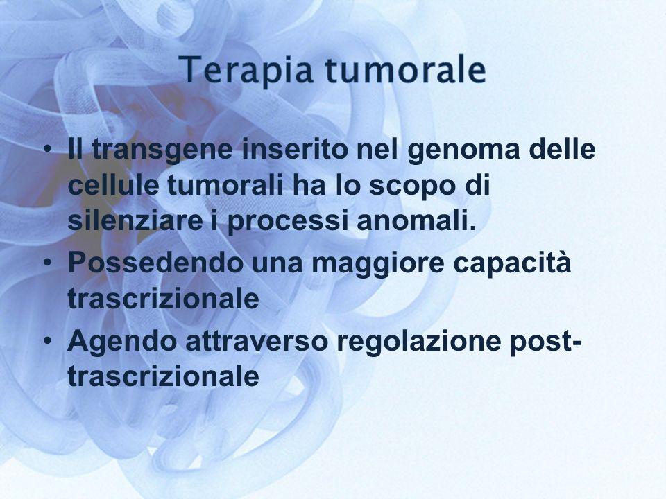 Terapia tumorale Il transgene inserito nel genoma delle cellule tumorali ha lo scopo di silenziare i processi anomali.