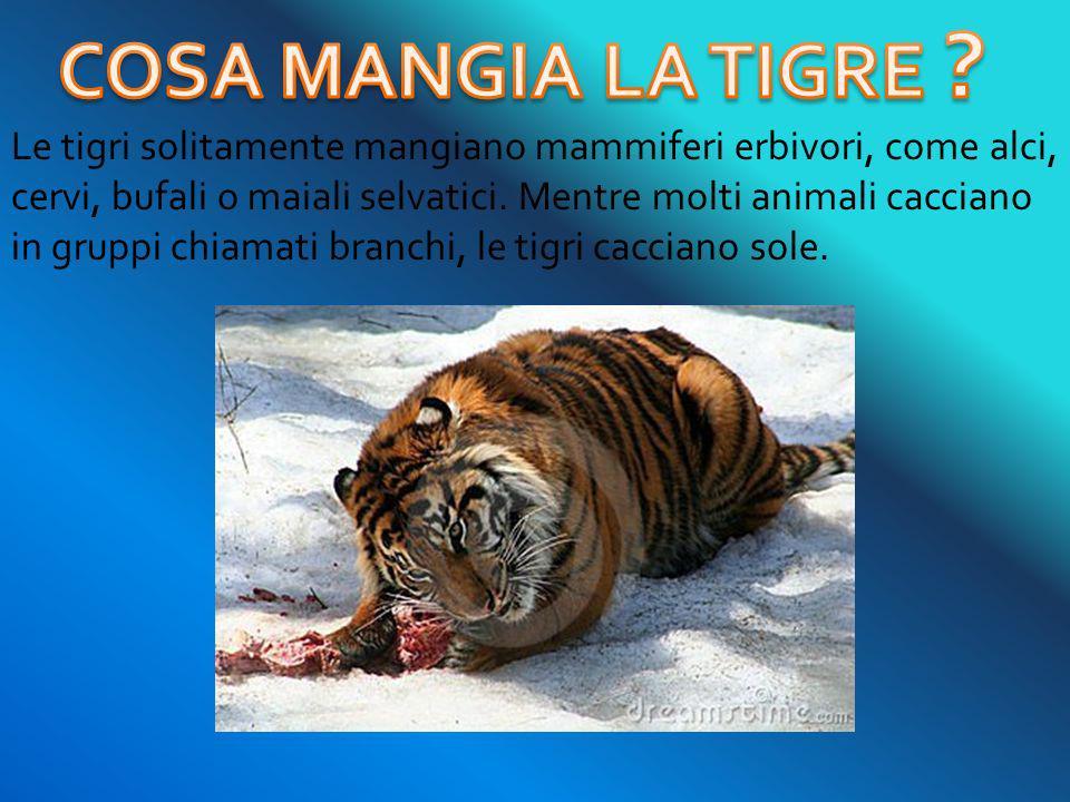 COSA MANGIA LA TIGRE